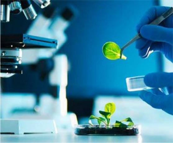 Ayurvedic Medicine Manufacturing Companies 1
